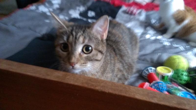 Heylie belle petite puce tigrée, née le 28 mars 2012, BEUVRAGES Imag1910
