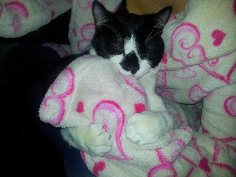 Mimi très beau chaton femelle noire et blanche Mimi_a10