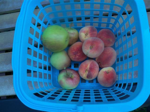 It's Peach Season! Peache10