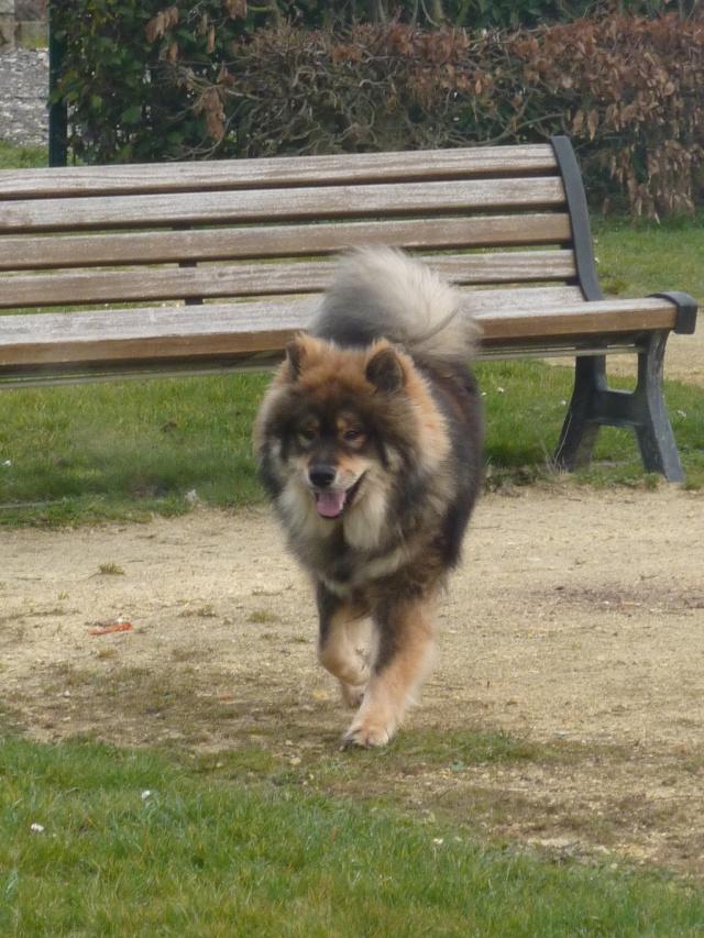 le plus beau chien du monde, mon poilu à moi! New tofsP2 P1060917