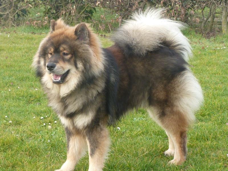 le plus beau chien du monde, mon poilu à moi! New tofsP2 P1060918