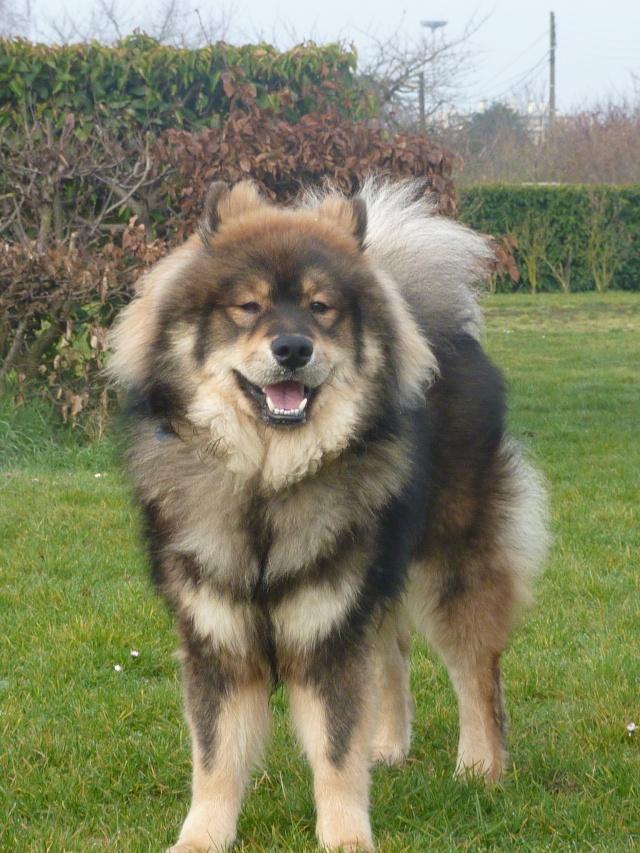 le plus beau chien du monde, mon poilu à moi! New tofsP2 P1060920