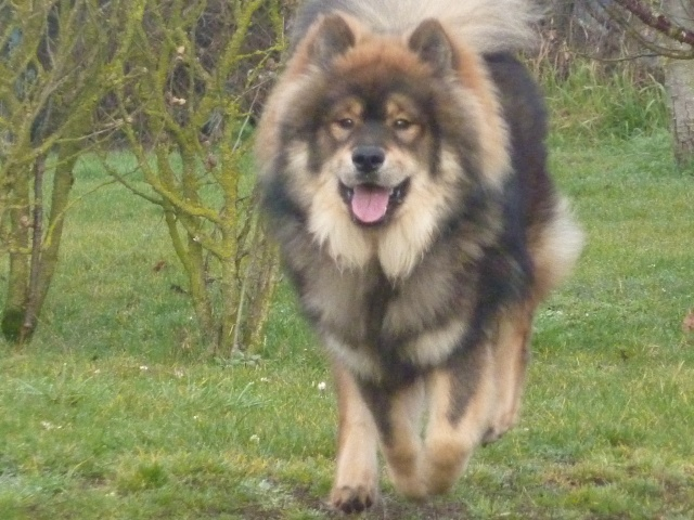 le plus beau chien du monde, mon poilu à moi! New tofsP2 P1060921