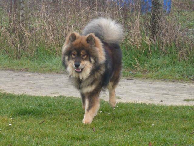 le plus beau chien du monde, mon poilu à moi! New tofsP2 P1060922