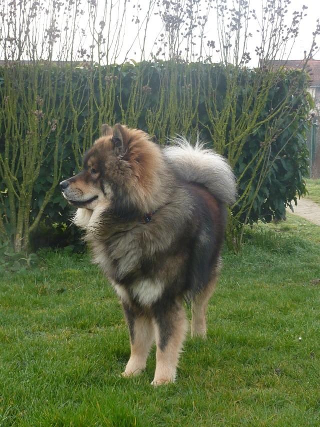 le plus beau chien du monde, mon poilu à moi! New tofsP2 P1060923