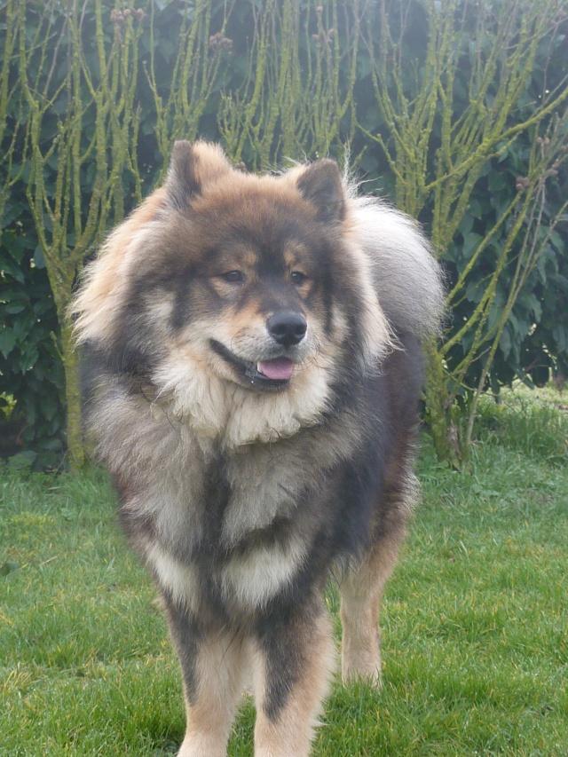 le plus beau chien du monde, mon poilu à moi! New tofsP2 P1060924
