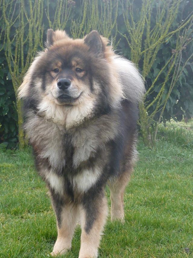 le plus beau chien du monde, mon poilu à moi! New tofsP2 P1060925