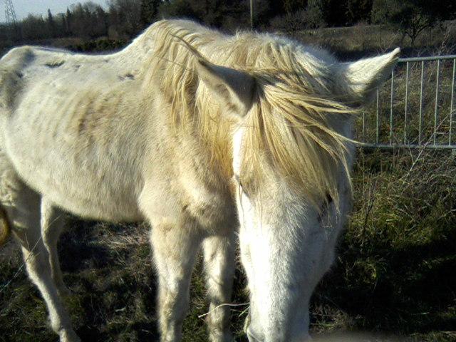 Trois chevaux trouvés (84)  P14-0312