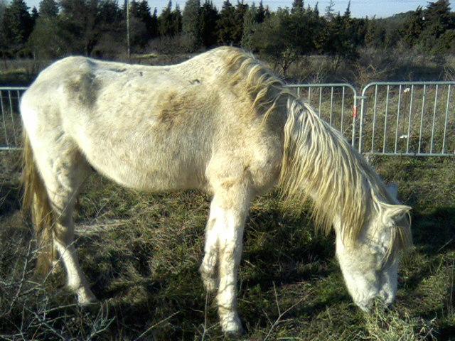 Trois chevaux trouvés (84)  P14-0313