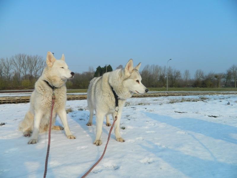 Balades dans la neige Dscn1211