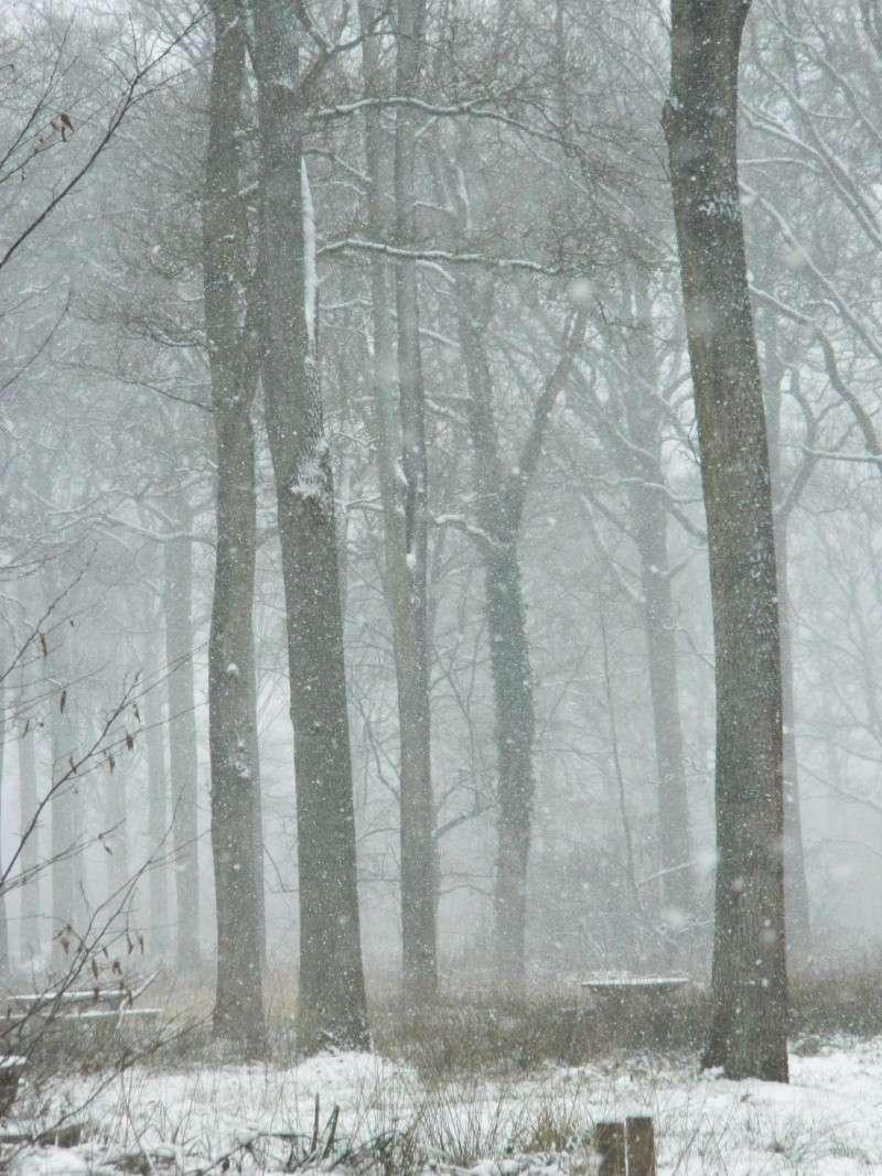 Balades dans la neige Dscn2712