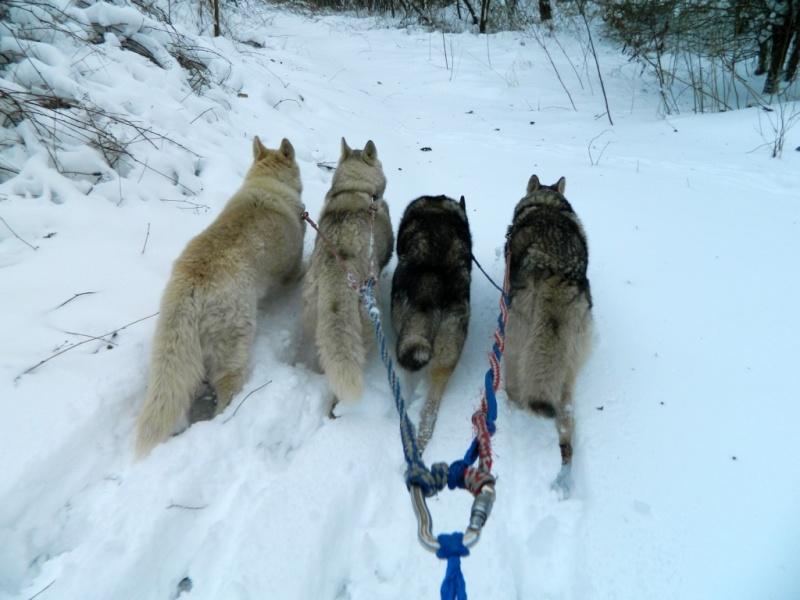 Balades dans la neige Dscn2810