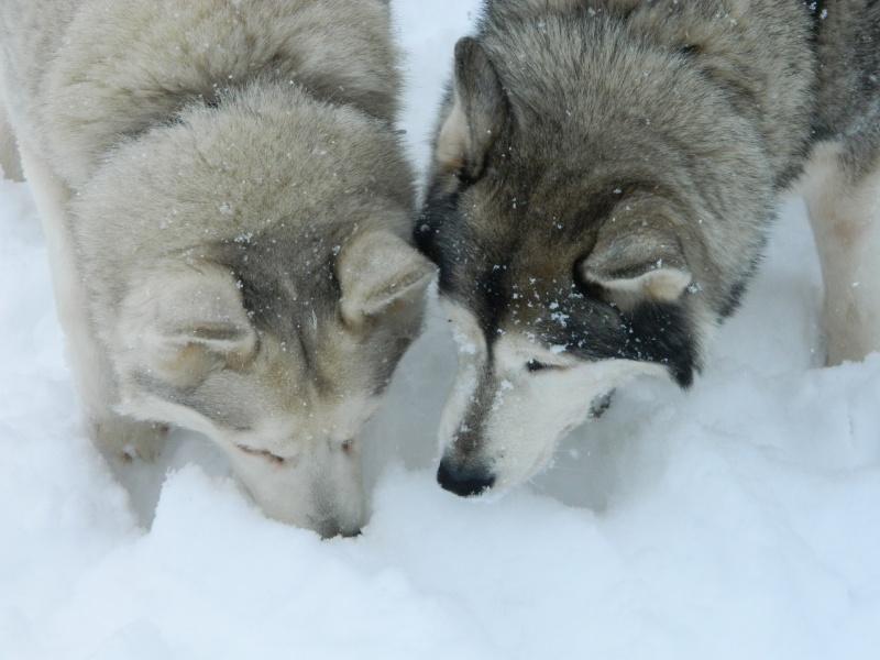 Balades dans la neige Dscn2811
