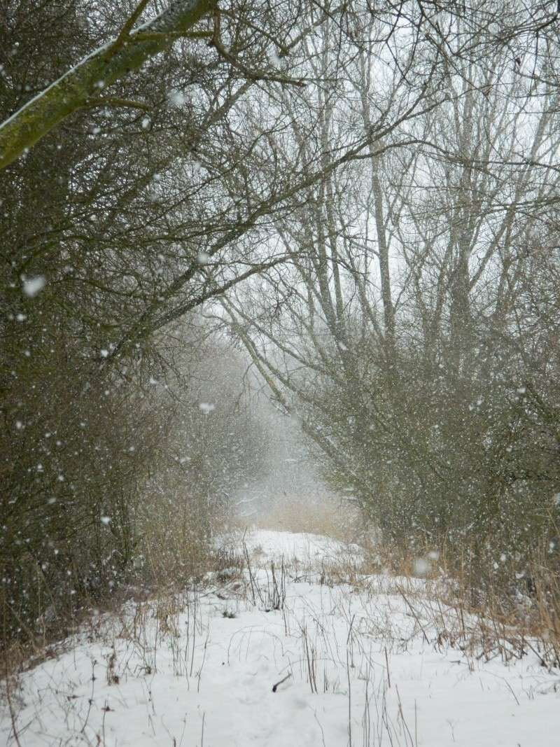 Balades dans la neige Dscn2911