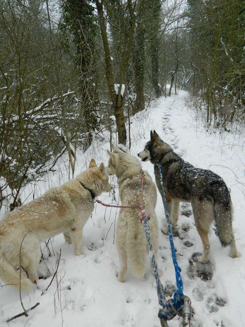 Balades dans la neige Dscn2912