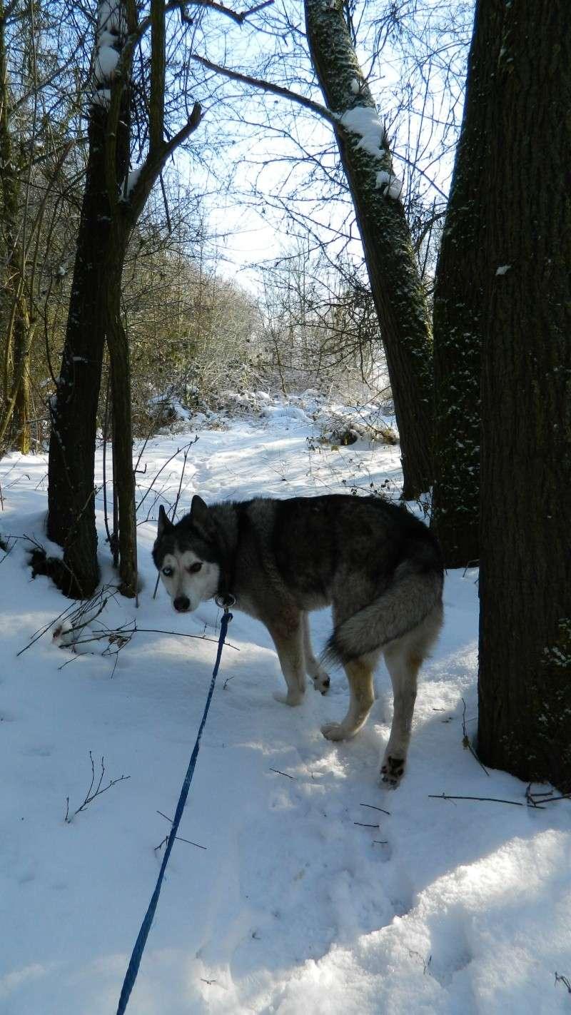 Balades dans la neige - Page 2 Dscn3010