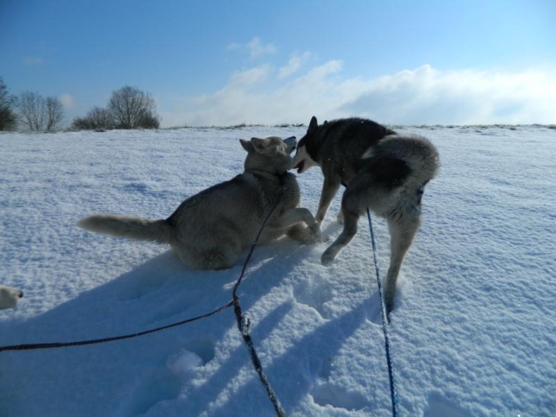Balades dans la neige Dscn3011