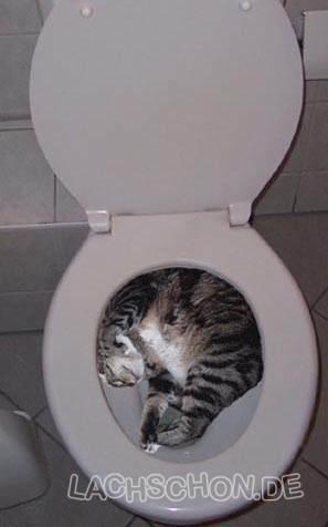 Bilder für die lieben Dementen - Seite 6 Katzek11