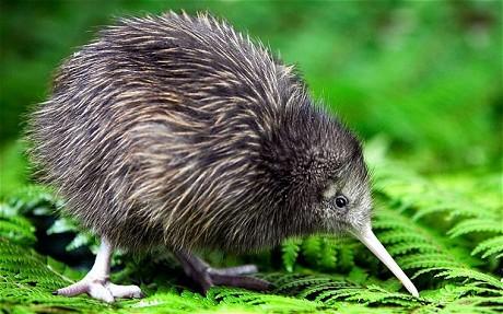 BoB Mascot Kiwi_110