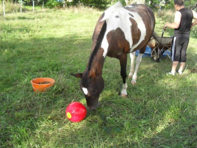 Jouet pour chevaux Sdc14617