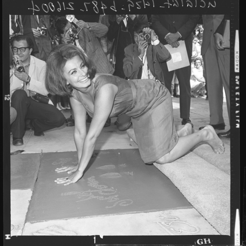 Sophia Loren is 75! - Page 4 Tumbl869