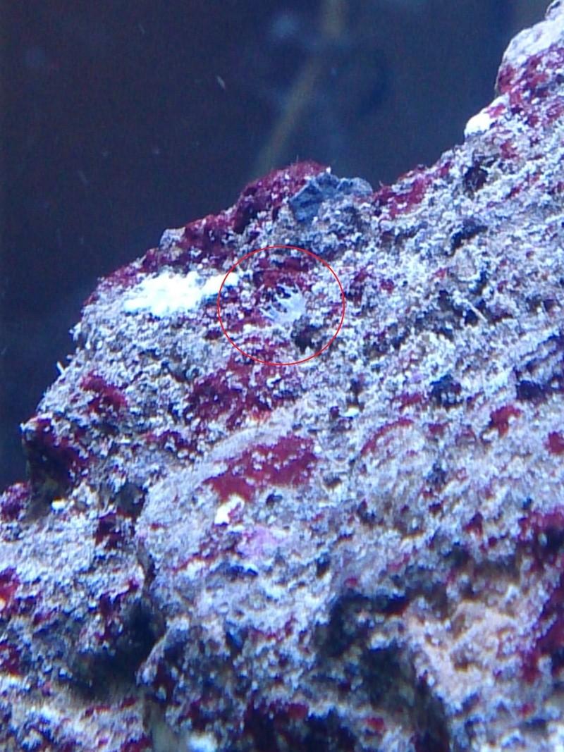 Red Sea MAx 130D Dsc_0011