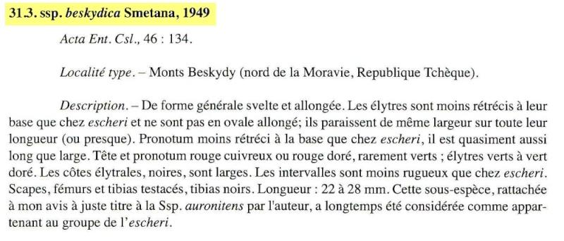 [C.(Chrysocarabus)auronitens escheri] n.beskydica D_bmp10