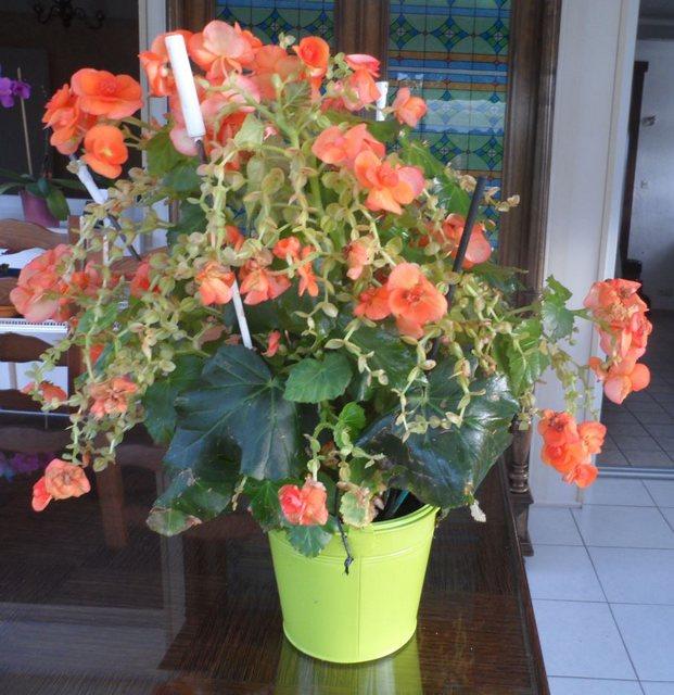 Les plantes d'intérieur de Madame - Page 3 Captur25