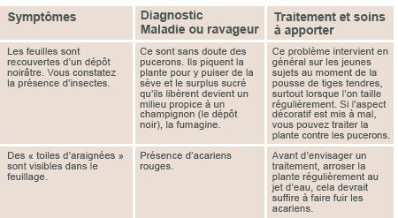 JARDINAGE ( février - mars 2013 ) Diagno12