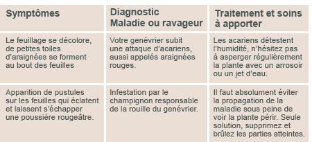 JARDINAGE ( février - mars 2013 ) Diagno13