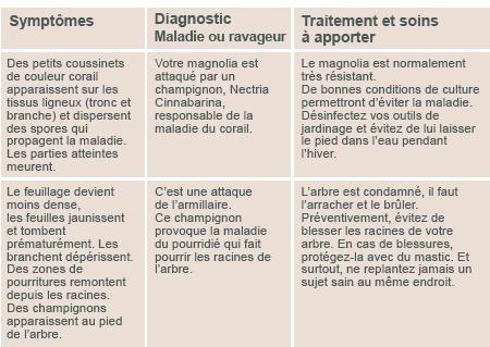 JARDINAGE ( février - mars 2013 ) Diagno15