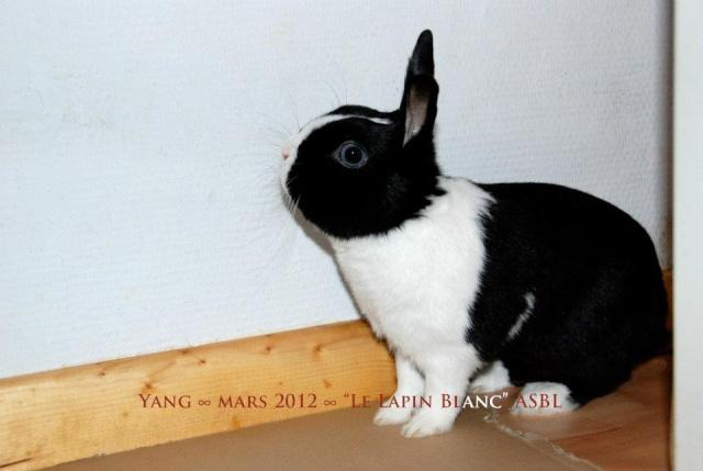 Lapins à l'adoption (Association Le Lapin Blanc) 52872010