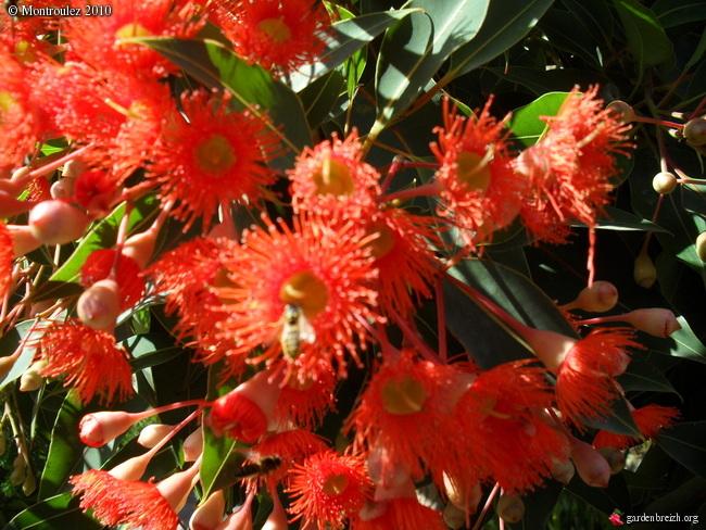 Fleurs du bout du monde- floraisons exotiques Gbpix_10