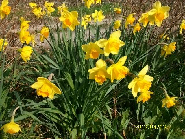 30 - Le printemps  - Page 4 Mars_028