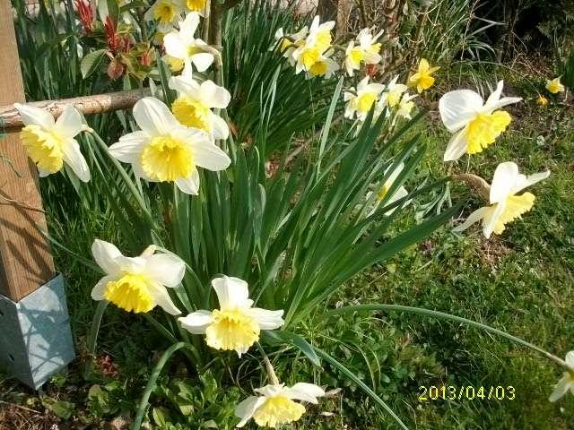 30 - Le printemps  - Page 4 Mars_029