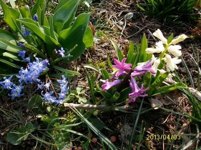 30 - Le printemps  - Page 4 Mars_032