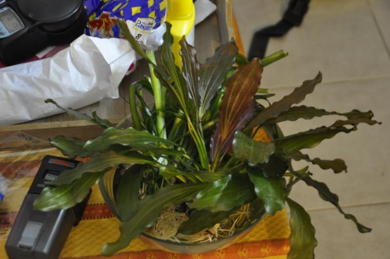 nom de cette plante _dsc0610