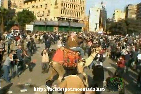 Les fils des Pharaons assiégés par des chameliers (photos) - Page 2 Snap9710