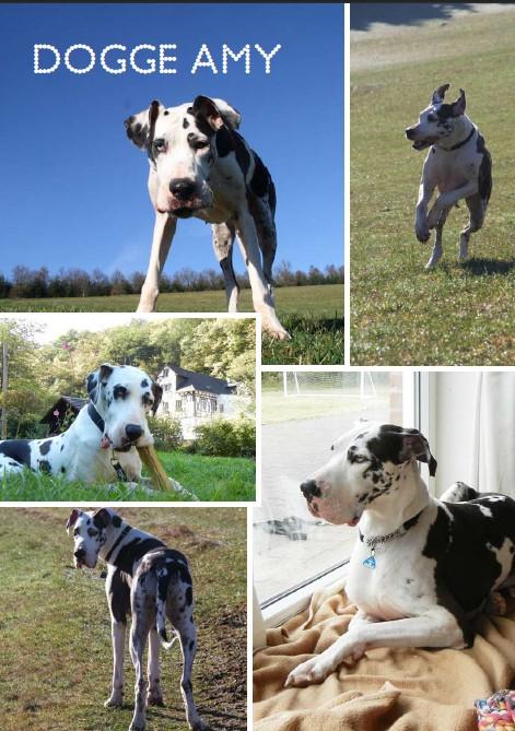 Dogge Amy Amy11