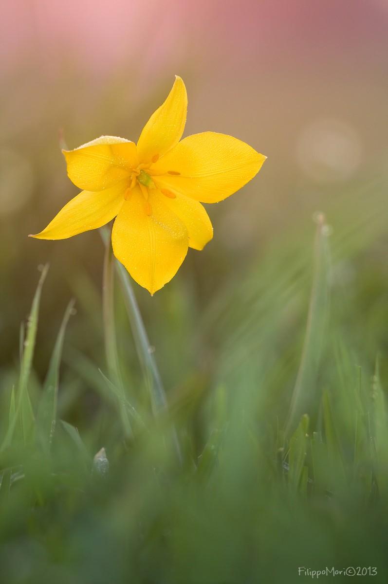 Tramonto dietro il Tulipano... Tulipa12