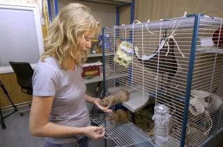 [Article] Pays-Bas: les rats de la police ! Topele10