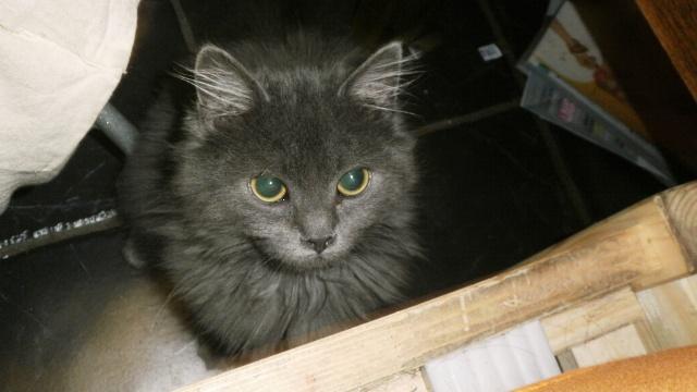 Toulouse chaton gris de 3 mois. - Page 2 Photo_11