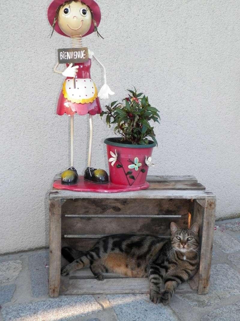 GABY, chatonne tigrée noir et blanche, née en 2011 - Page 2 100_0110