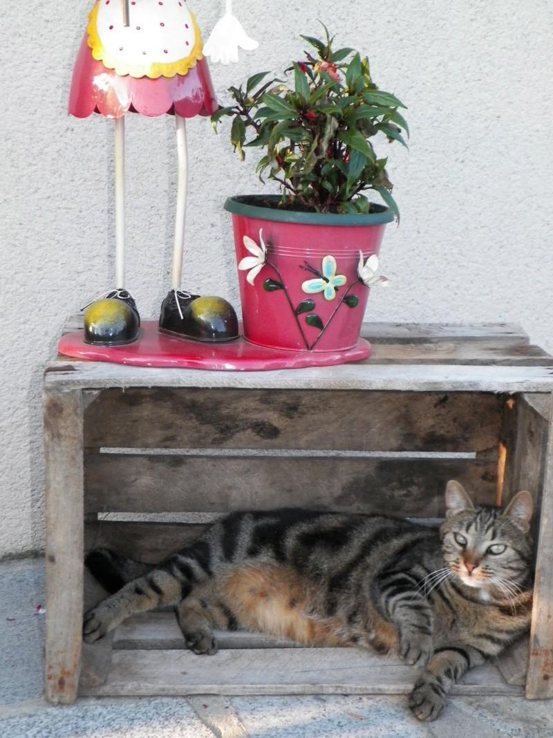 GABY, chatonne tigrée noir et blanche, née en 2011 - Page 2 100_0111