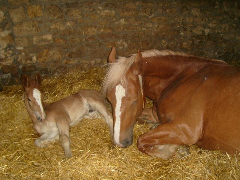 Thème de Mai 2013 : Le Cheval en pleine sieste!! - Page 2 Upsilo10