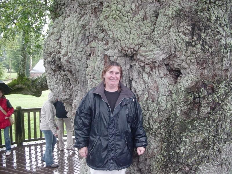 si j'étais un arbre, je serais... Photos10