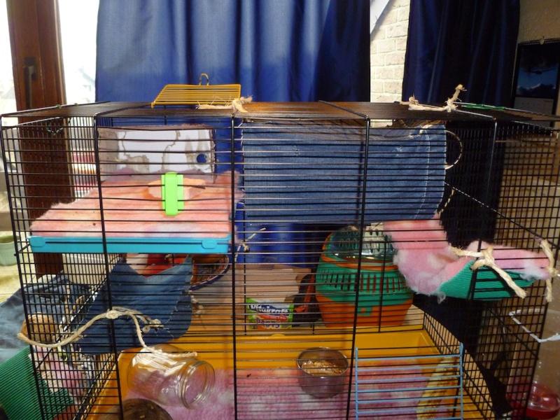 Photos de vos cages P1010418