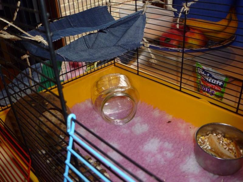 Photos de vos cages P1010419