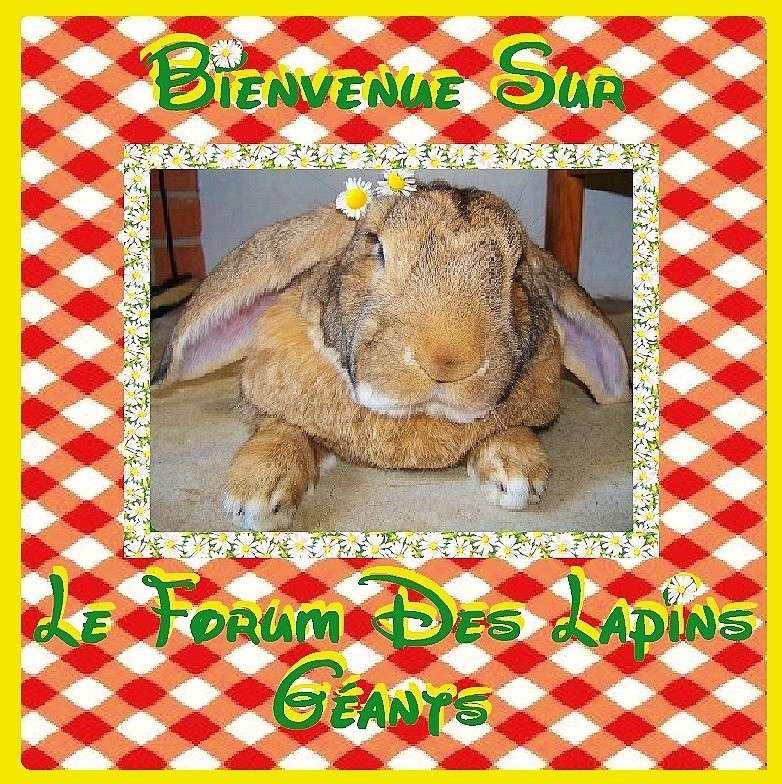 Lapins Géants d'Aldie