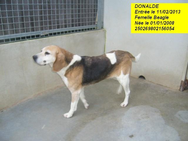 DONALDE Beagle 250269802156054 P1150223